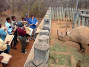 Drawing a rhino in Lapalala Game Reserve